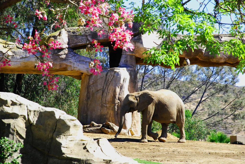 Baby Elephant's Morning Stroll by LerraSMN