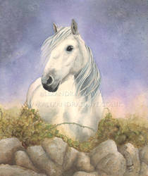 White horse sketch