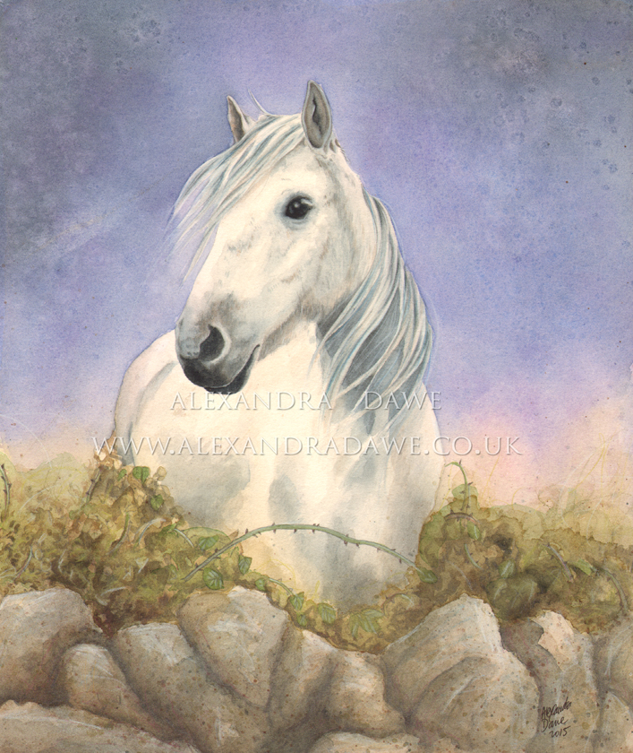 White horse sketch by alexandradawe