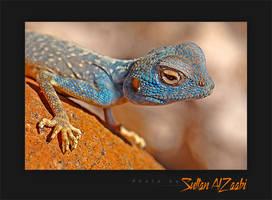 Blue Lizard by Sultan-AlZaabi