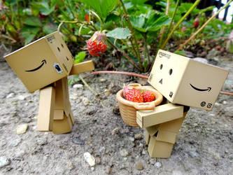 strawberry harvest by Hiromi-Sakakibara
