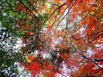Japan leaves