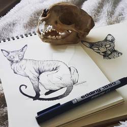Sphynx study