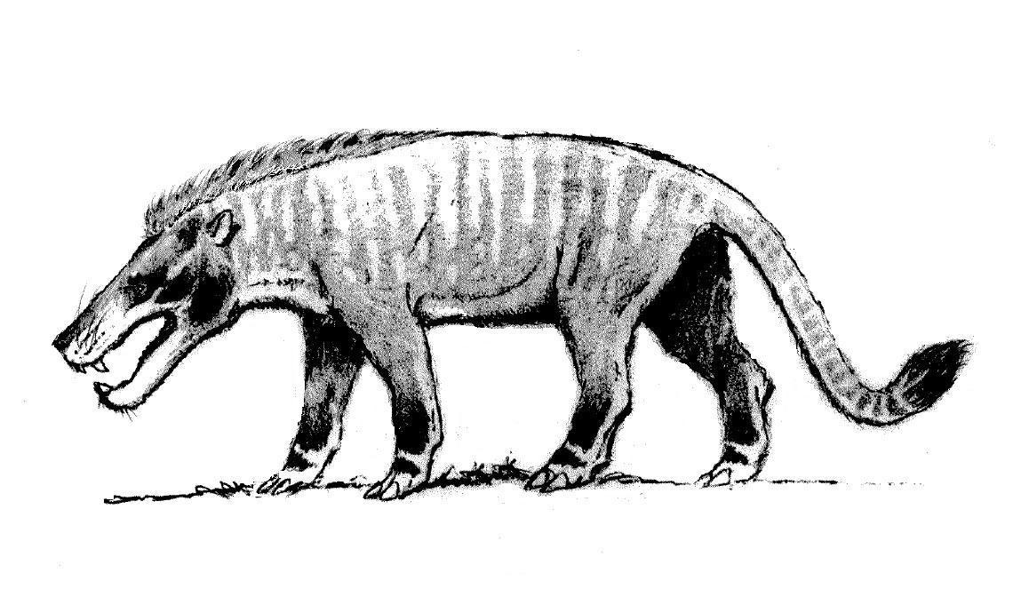 Andrewsarchus by StevoDarkly on DeviantArt
