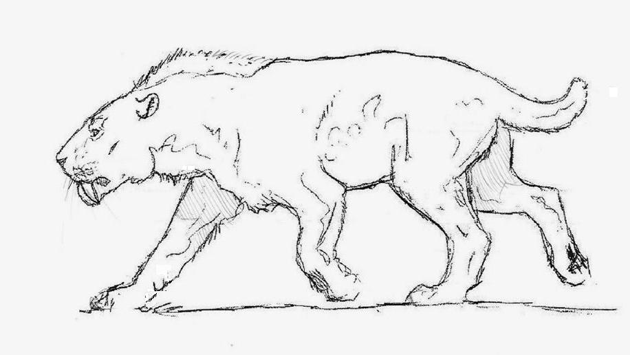 sabertooth cat coloring pages - photo#30
