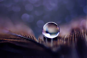 Magical by SheilaMB-Photography