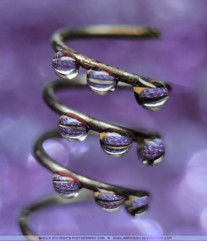 Purple by SheilaBrinson