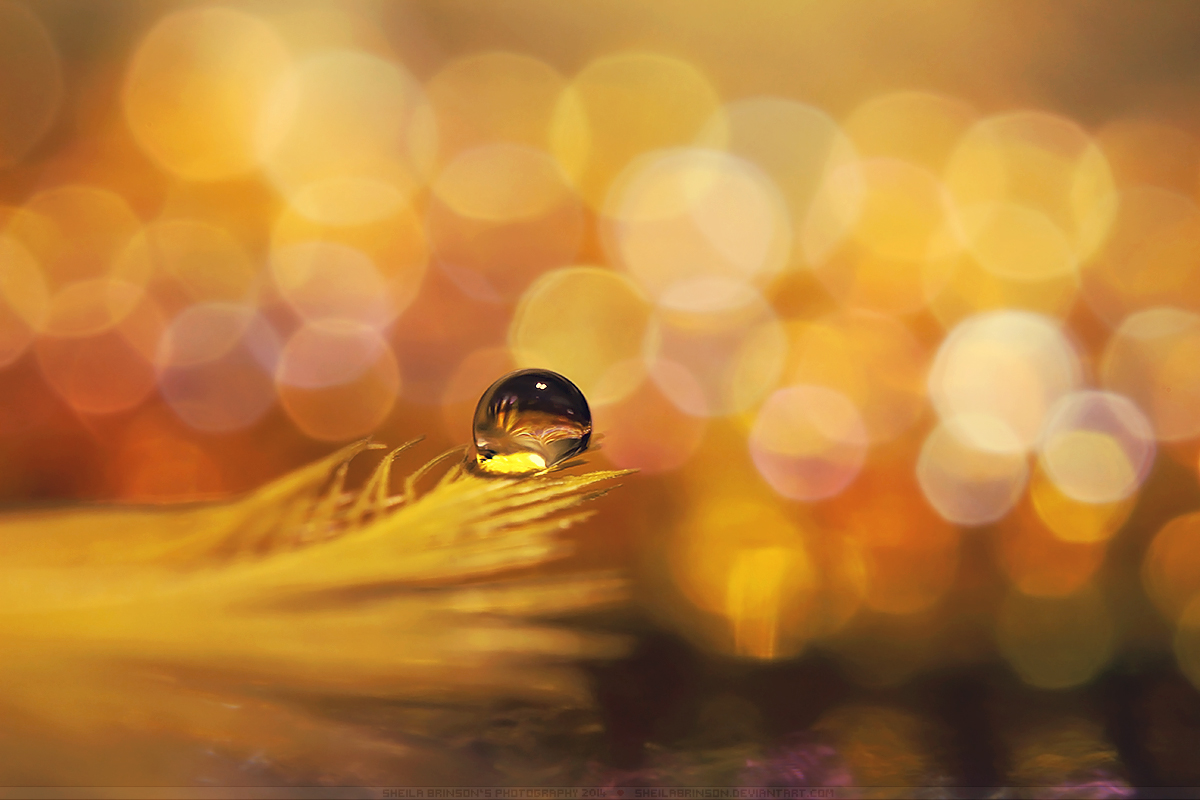 Feeling Yellow by SheilaBrinson