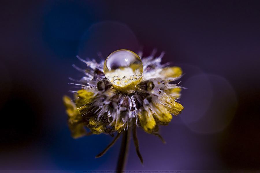 Ugly Is Beautiful by SheilaMB-Photography