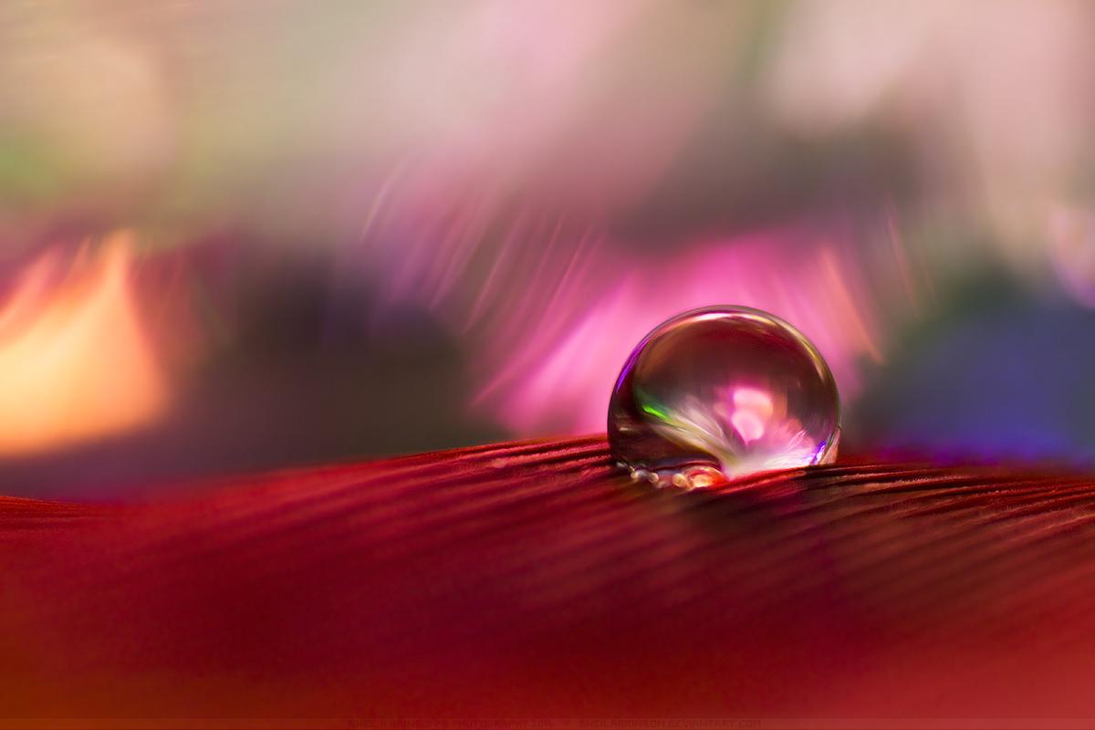 Aurora by SheilaBrinson