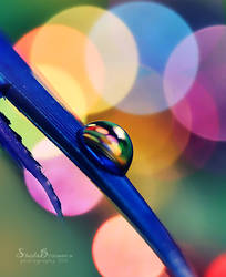 Colors Everywhere by SheilaMB-Photography