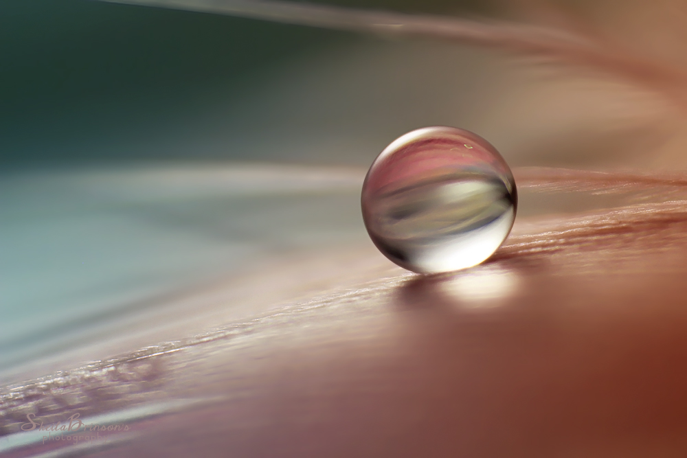 Simplicity by SheilaMB-Photography