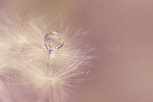 Wish by SheilaMB-Photography