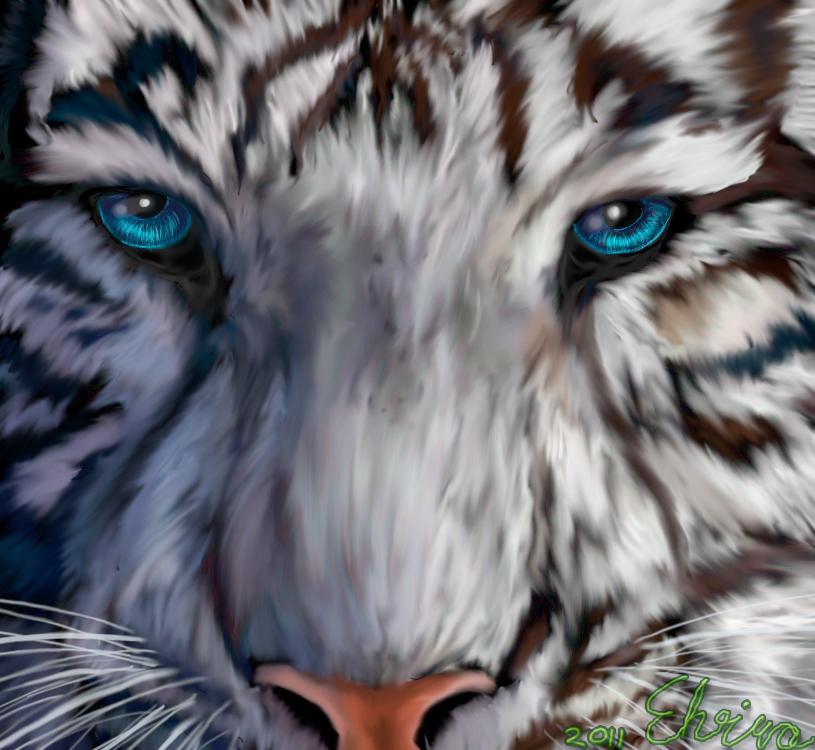royal bengal tiger wallpaper hd