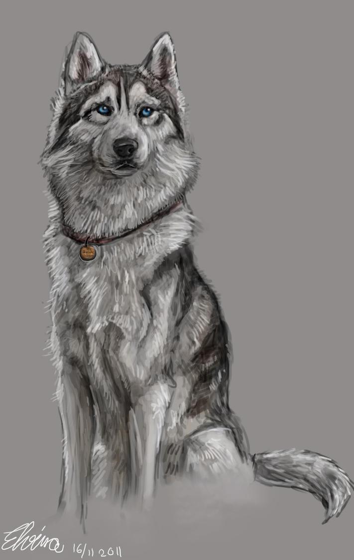 Husky by WolfHowl10