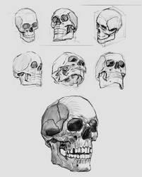 skull studies may 23