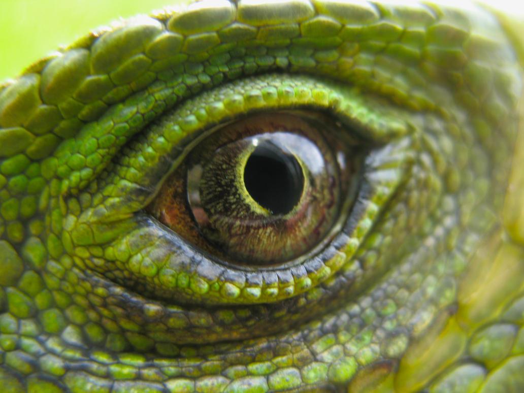 iguana eye painting - photo #22