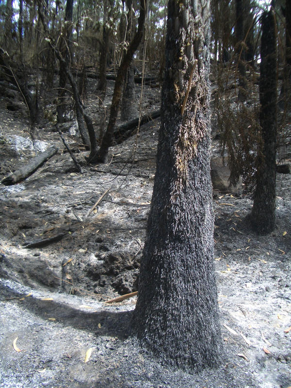 Bushfire 3 by thenickk