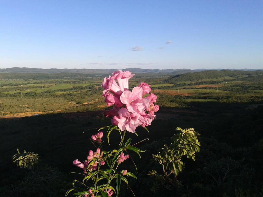 Flor cor-de-rosa by gonke-king