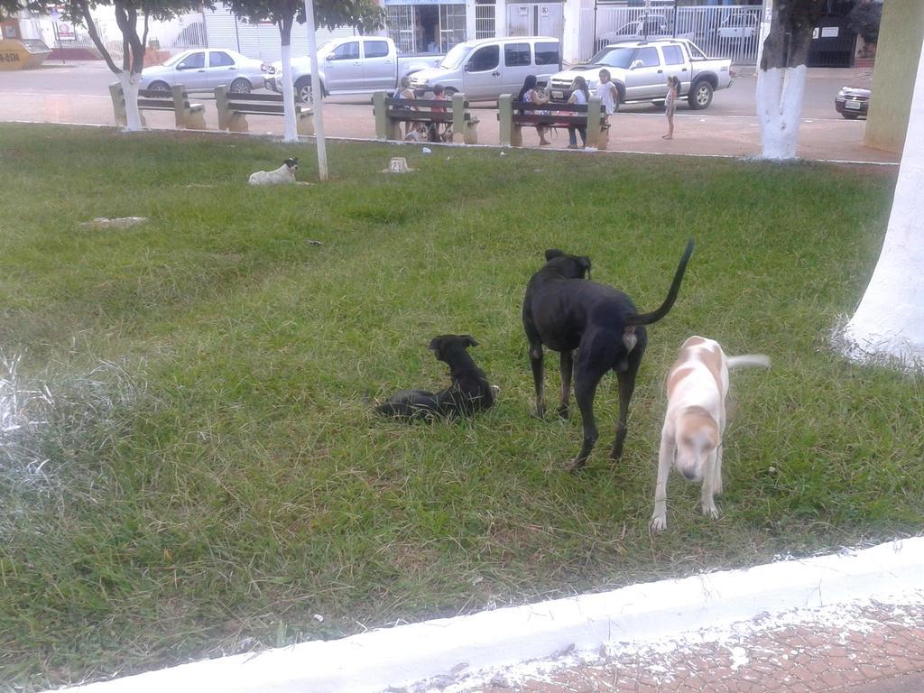 Cachorros aproveitando a tarde by gonke-king