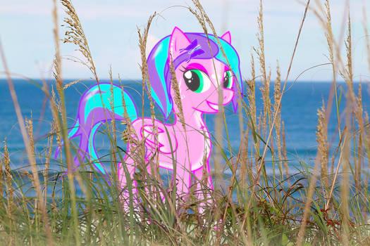 Candy Light on the Beach