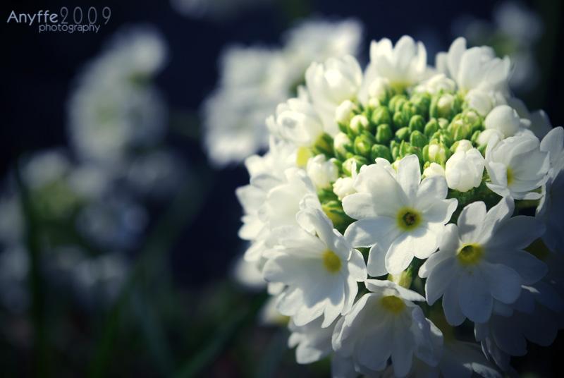 Blooming dream • klik pro zvětšení