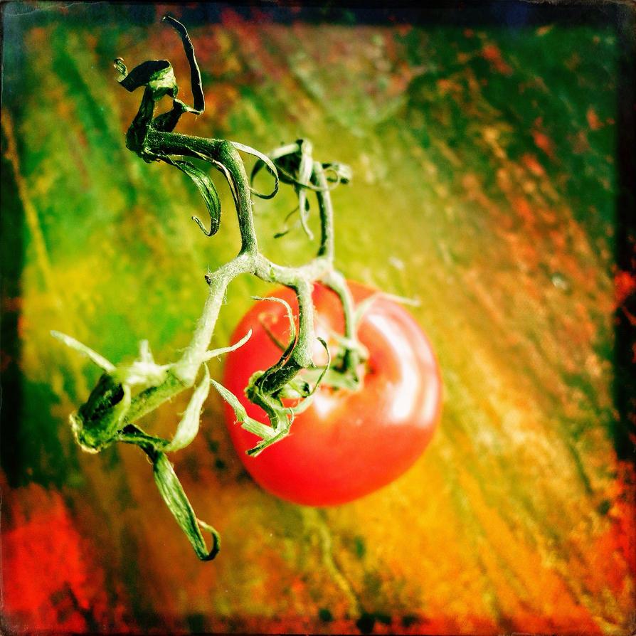 Tomatoe by jfdupuis