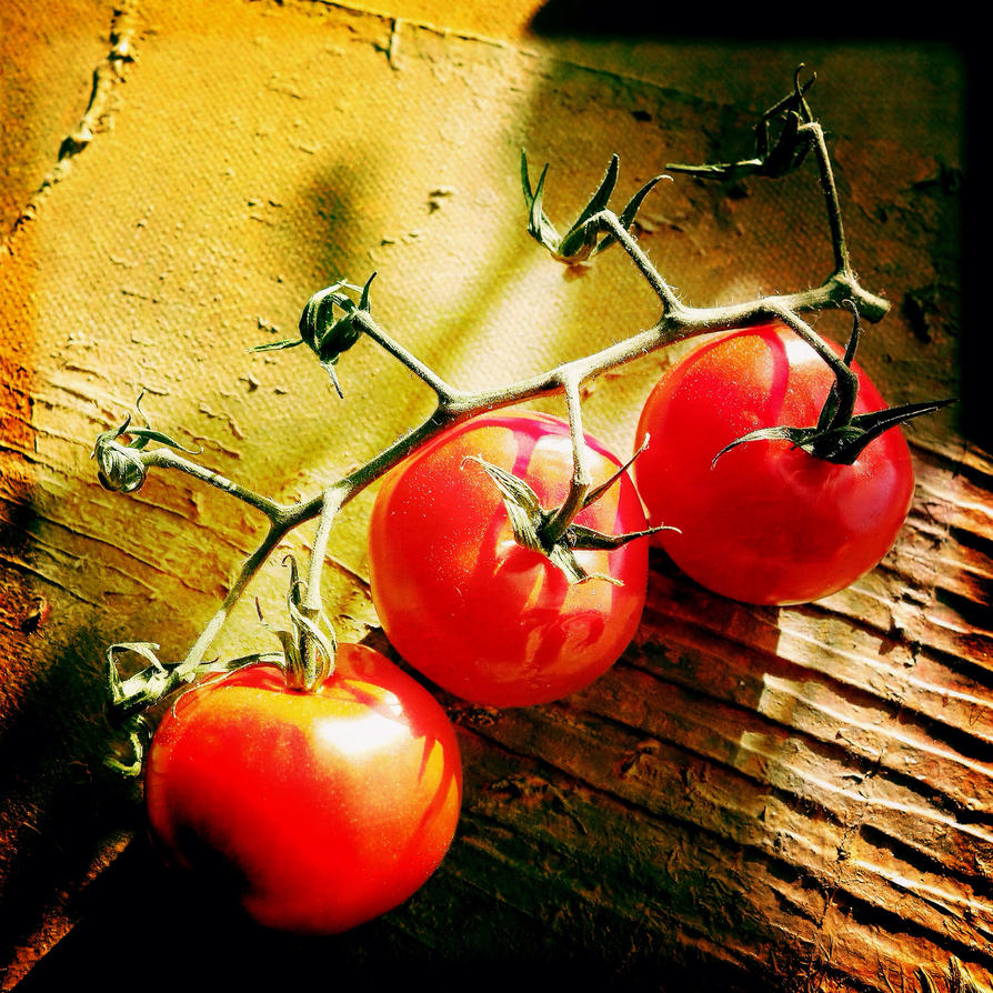 Tomatoes by jfdupuis