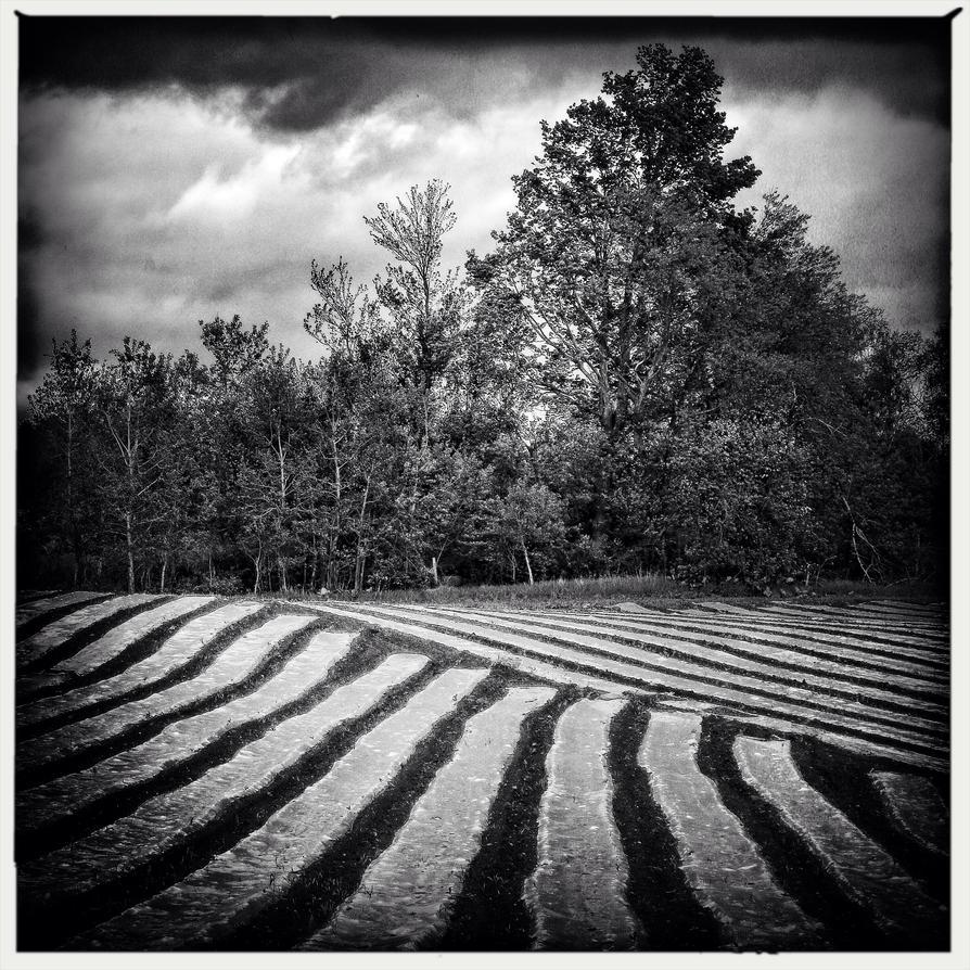 Stripes by jfdupuis
