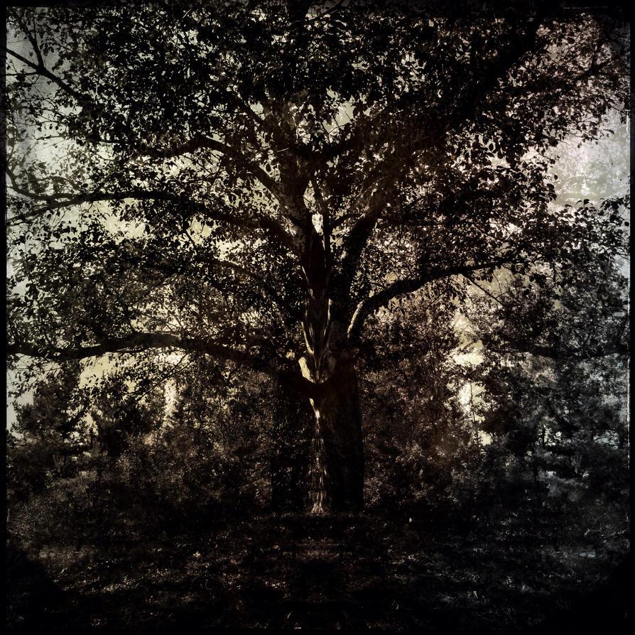 Tree dream by jfdupuis