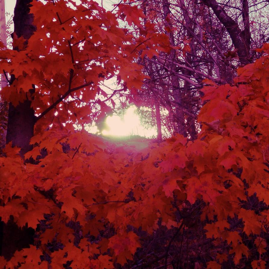 Rouge automne by jfdupuis