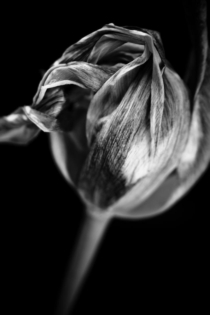 Floral monochrome   1 by jfdupuis