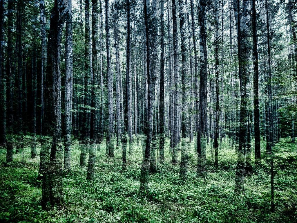 Mystic forest Quebec by jfdupuis