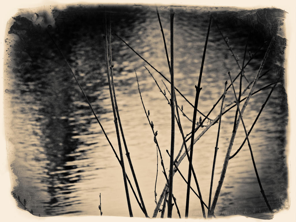 Ambiance  zen by jfdupuis