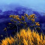 Infrared nature Magog