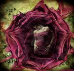 Pink rose girl