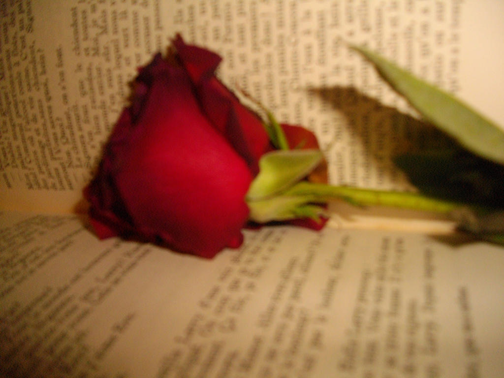 the book and rose