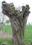 Ancient Twisted Tree