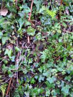 Undergrowth by FairyAndTurtleStock