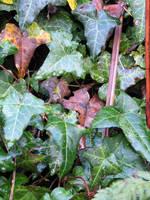 Ivy 2 - Stock by FairyAndTurtleStock