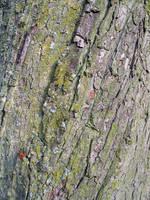 Bark Texture 1 by FairyAndTurtleStock