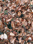Dead Russet Leaves - Texture
