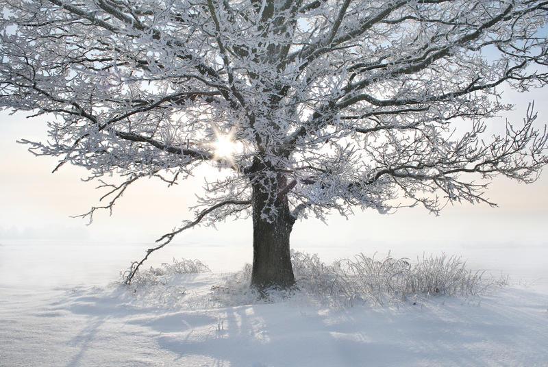 Winter fairytale by Ingaaaa