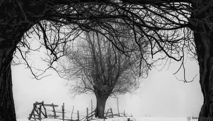 In their arms.. by IoanBalasanu