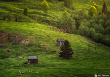 Green Bliss by IoanBalasanu