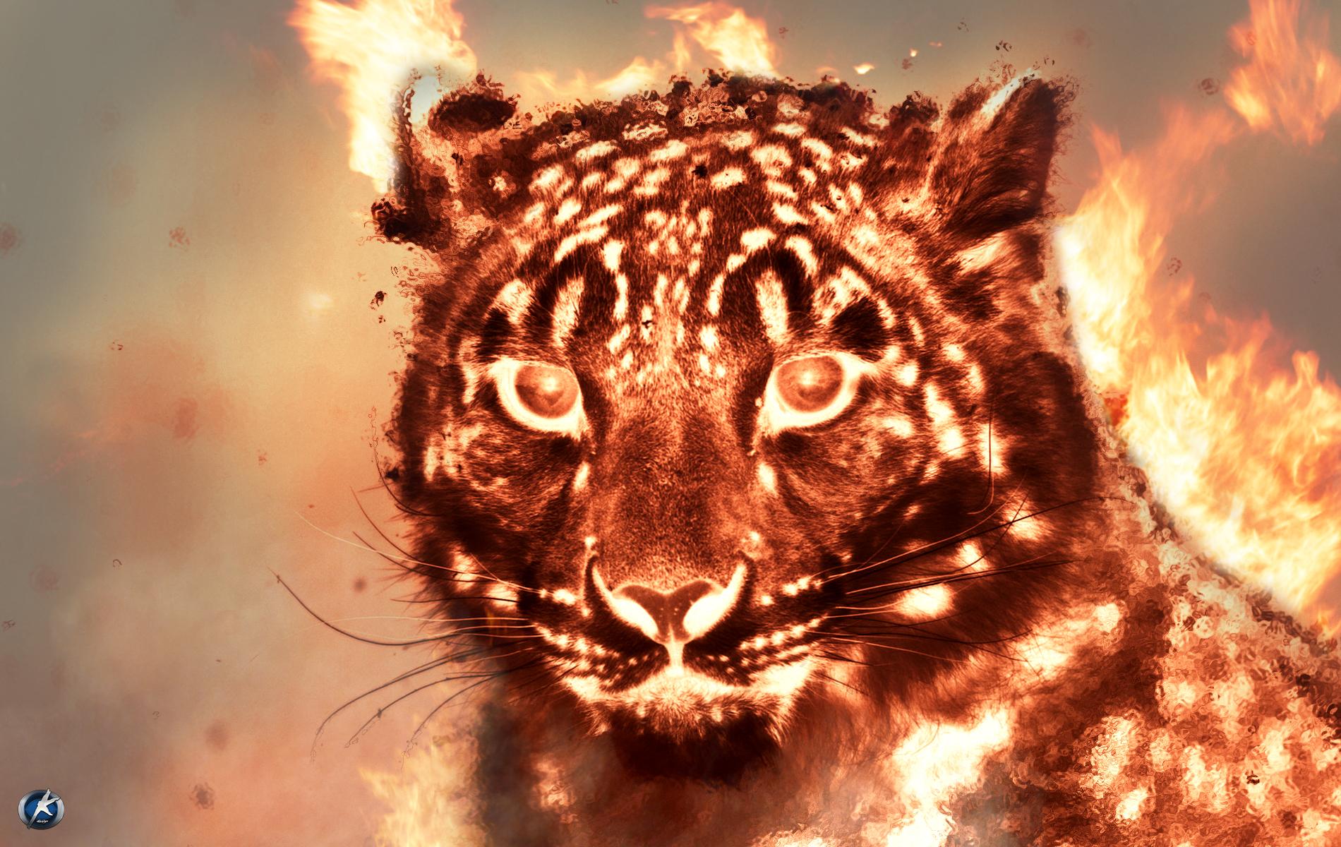 Fire Tiger Wallpaper by Okman179 on DeviantArt