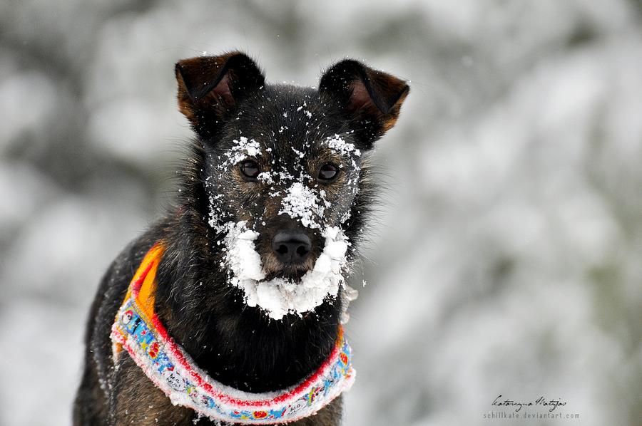 Winter Beauty by kataszynoviec