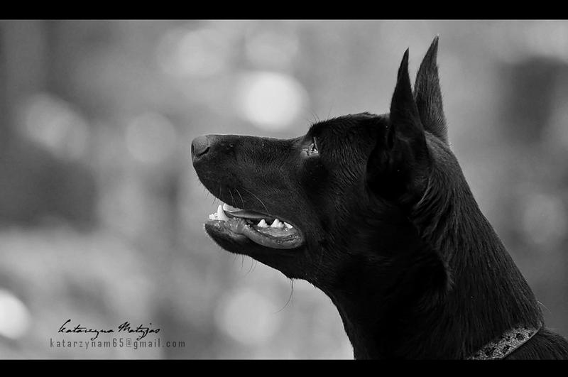 Beast 05 by kataszynoviec