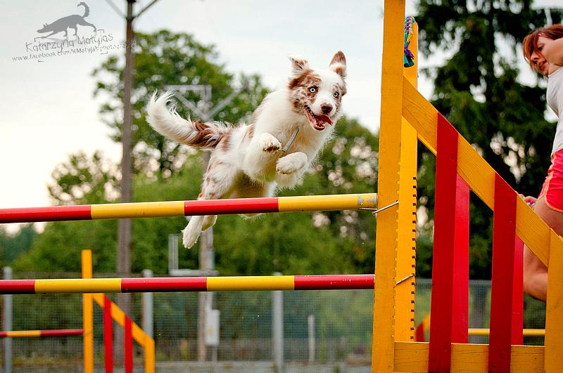Jumper by kataszynoviec