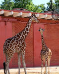 Kiss Me, I'm a Giraffe